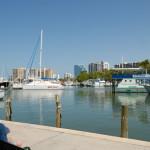 Downtown Sarsota Marina Jacks