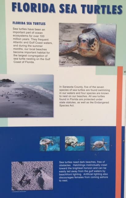 Nokomis Beach-2